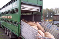 Livestock Haulage
